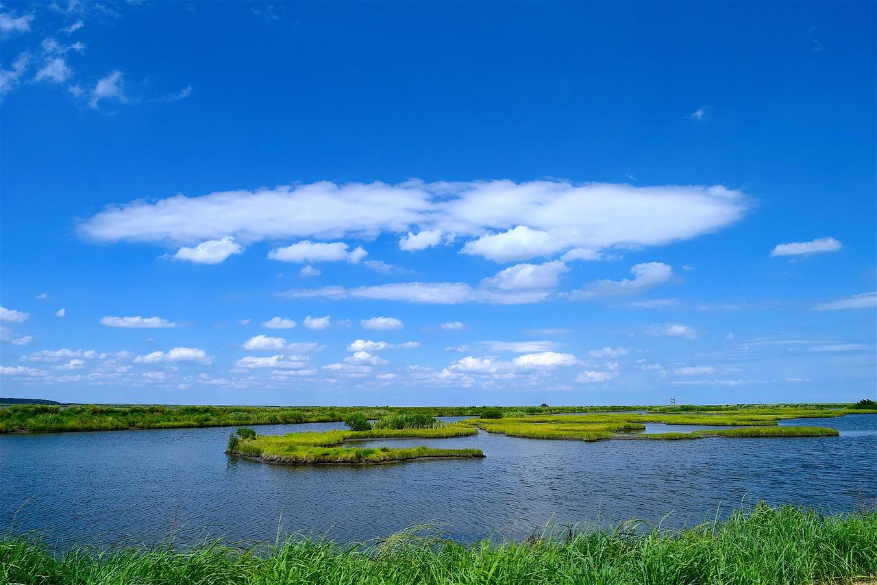 Les écosystèmes, définition, exemples, caractéristiques ...